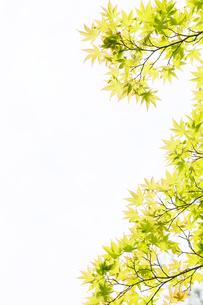 新緑イメージの写真素材 [FYI01631395]