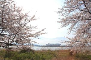 桜とサッカースタジアムの写真素材 [FYI01631410]
