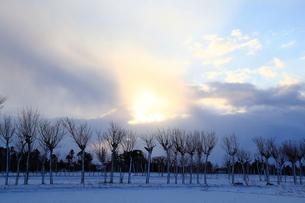 冬の田園風景とハサ木の写真素材 [FYI01631460]