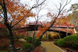 秋の弥彦公園の写真素材 [FYI01631480]