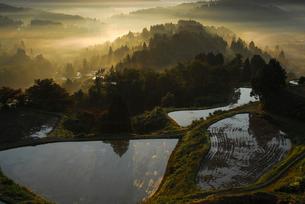 朝日射す稲刈り後の棚田の写真素材 [FYI01631560]