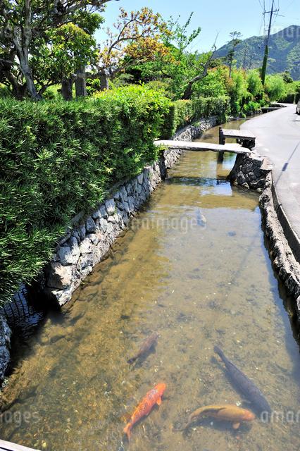 藍場川と鯉の写真素材 [FYI01631922]