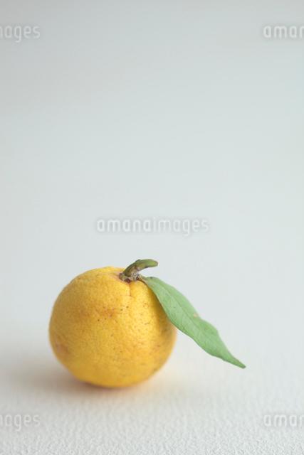柚子の写真素材 [FYI01634843]