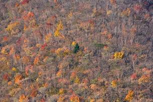 茶臼岳中腹の紅葉の森の写真素材 [FYI01634847]