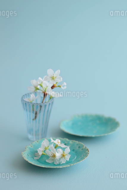 桜の花の写真素材 [FYI01634859]