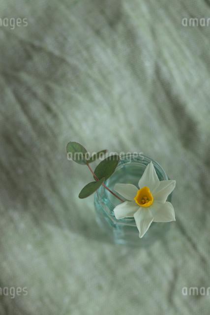 水仙の写真素材 [FYI01634876]