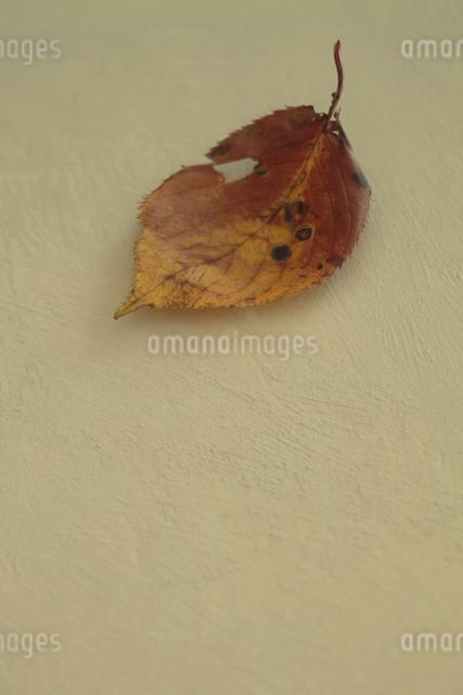 枯葉の写真素材 [FYI01634926]