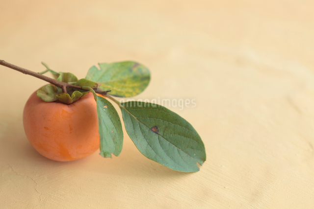 葉付きの柿の写真素材 [FYI01634927]