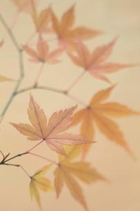 紅葉の写真素材 [FYI01634941]