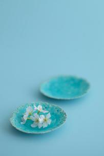 桜の花の写真素材 [FYI01634953]