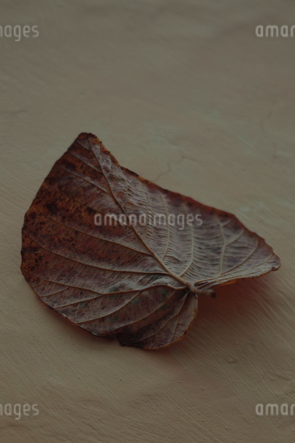 枯葉の写真素材 [FYI01634966]