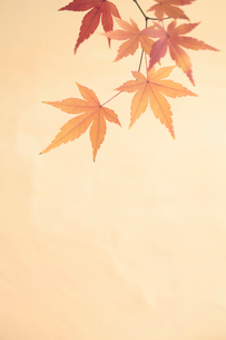 紅葉の写真素材 [FYI01634985]
