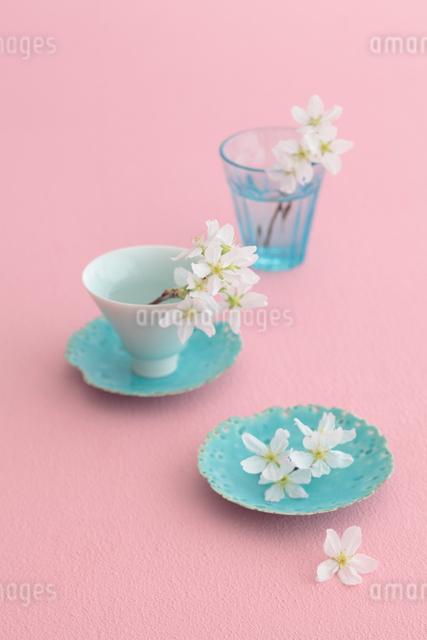 桜の花の写真素材 [FYI01634991]