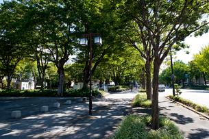 白川公園脇の歩道と並木の写真素材 [FYI01635059]
