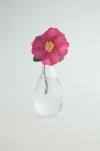 ガラス花器と椿の写真素材 [FYI01635132]
