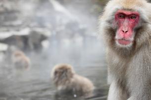 地獄谷野猿公苑の猿の写真素材 [FYI01635243]