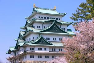 名古屋城周辺の桜並木の写真素材 [FYI01635340]