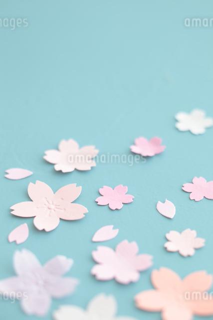 桜の切り紙の写真素材 [FYI01635505]