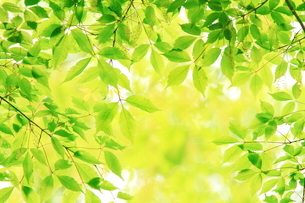 新緑の写真素材 [FYI01635535]