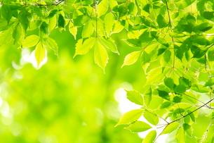 新緑の写真素材 [FYI01635636]