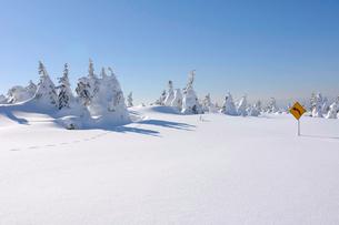 雪の積もったエコーラインと樹氷の写真素材 [FYI01636286]