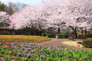 春の大宮花の丘農林公苑の写真素材 [FYI01636296]