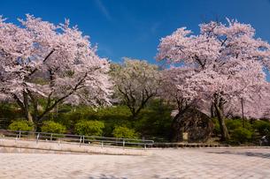 青空と桜の写真素材 [FYI01636952]