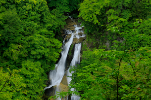 霧降の滝の写真素材 [FYI01636964]