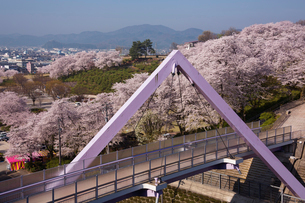 桜咲く西山公園の写真素材 [FYI01637024]