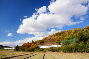 東海道新幹線の写真素材 [FYI01637157]
