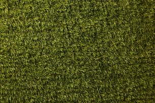 緑の芝生の写真素材 [FYI01637217]
