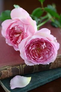 2輪の薔薇と洋書の写真素材 [FYI01637291]