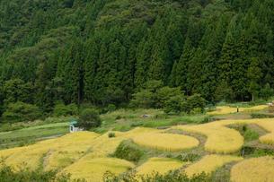 福島の棚田の写真素材 [FYI01637411]