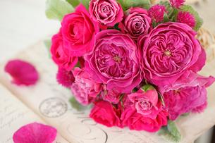 ピンク色のバラたちの写真素材 [FYI01637415]