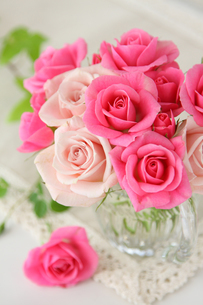 ピンクのバラの写真素材 [FYI01637417]