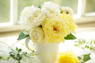 黄色と白のバラの写真素材 [FYI01637431]