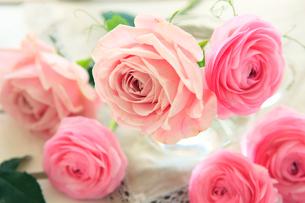 ピンク色の花たちの写真素材 [FYI01637452]