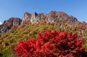 紅葉と妙義山の写真素材 [FYI01637498]