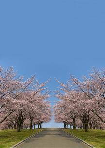 青空と土手沿いの桜並木の写真素材 [FYI01637581]