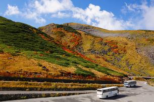 立山室堂平紅葉の写真素材 [FYI01637674]