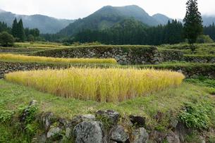 福島の棚田の写真素材 [FYI01637685]
