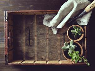 木の箱の中にある多肉植物とシャベルと麻布の写真素材 [FYI01637980]