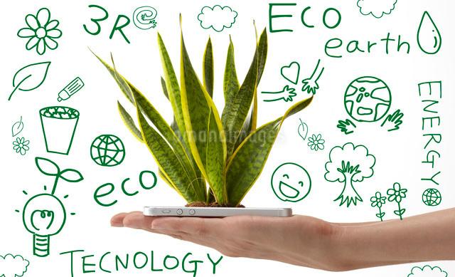 スマートフォンから生える植物を持つ女性の手の写真素材 [FYI01638156]