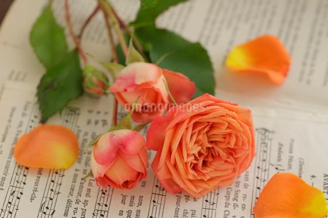バラと楽譜の写真素材 [FYI01638279]