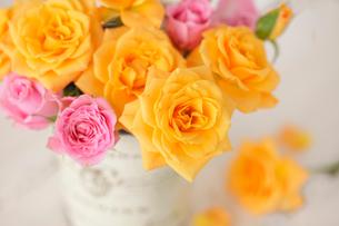 黄色のバラの写真素材 [FYI01638865]