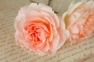 アプリコット色のバラの写真素材 [FYI01638913]