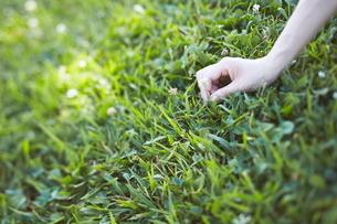 シロツメグサを摘む女性の写真素材 [FYI01638973]