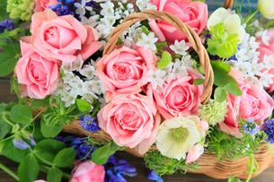 バラ ファンシードレスの写真素材 [FYI01639036]