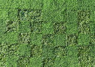芝生の写真素材 [FYI01639241]