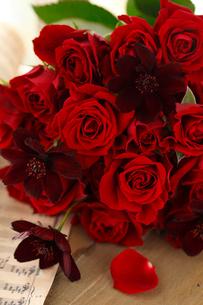 赤いバラとチョコレートコスモスの写真素材 [FYI01639249]